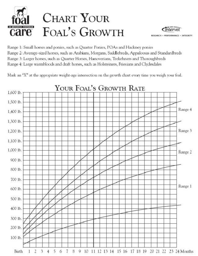 Horse Growth Chart Bogasrdenstaging